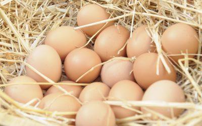 Los huevos camperos se imponen